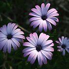 spring flowers by bribiedamo