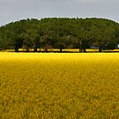Trees in canola Field by Hans Kawitzki