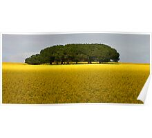 Trees in canola Field Poster
