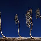 Alien Trees by Peter Daalder