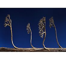 Alien Trees Photographic Print