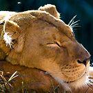 Sleeping Beauty by Edward Hor