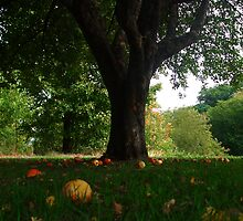 Under The Old Apple Tree by Janet Rymal
