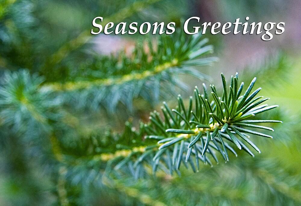 Christmas leaves - Seasons Greetings by Martin Pot