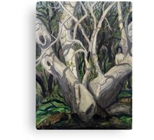 Sycamore Tree in Peppersauce Canyon, Arizona Canvas Print