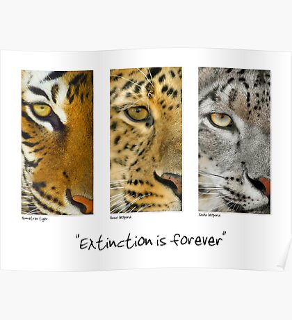 Extinction is forever Poster