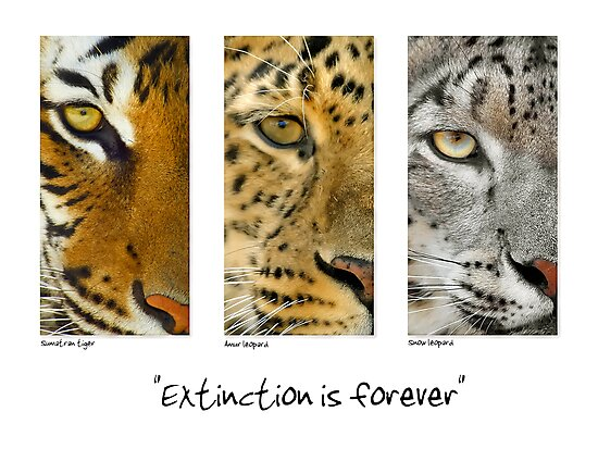 Extinction is forever by Mundy Hackett