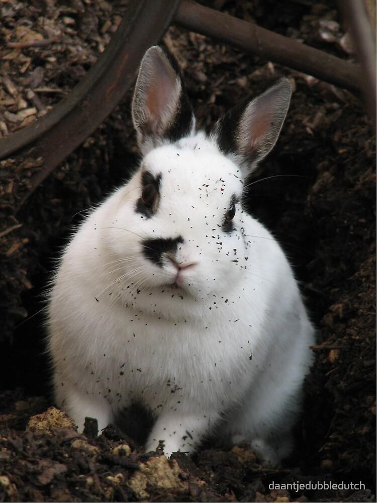 bunny digger... by daantjedubbledutch