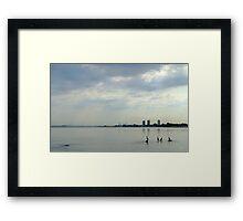 Four Cormorants Framed Print
