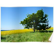 Solitary lonely tree on a hill  Poster