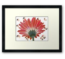 Bubbling Daisies Framed Print