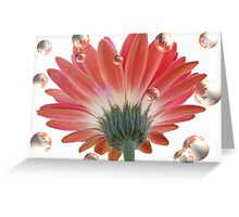 Bubbling Daisies Greeting Card