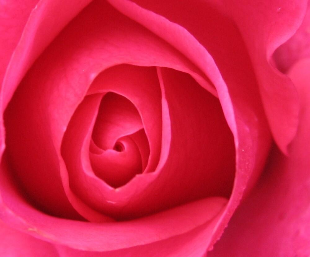 Rose 1 by Sara Wiggins