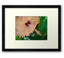 Pastel hibiscus Framed Print