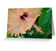 Pastel hibiscus Greeting Card