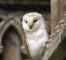 Barn Owl by Kate MacRae