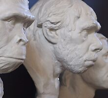 Evolution of Man by Mark Wilson