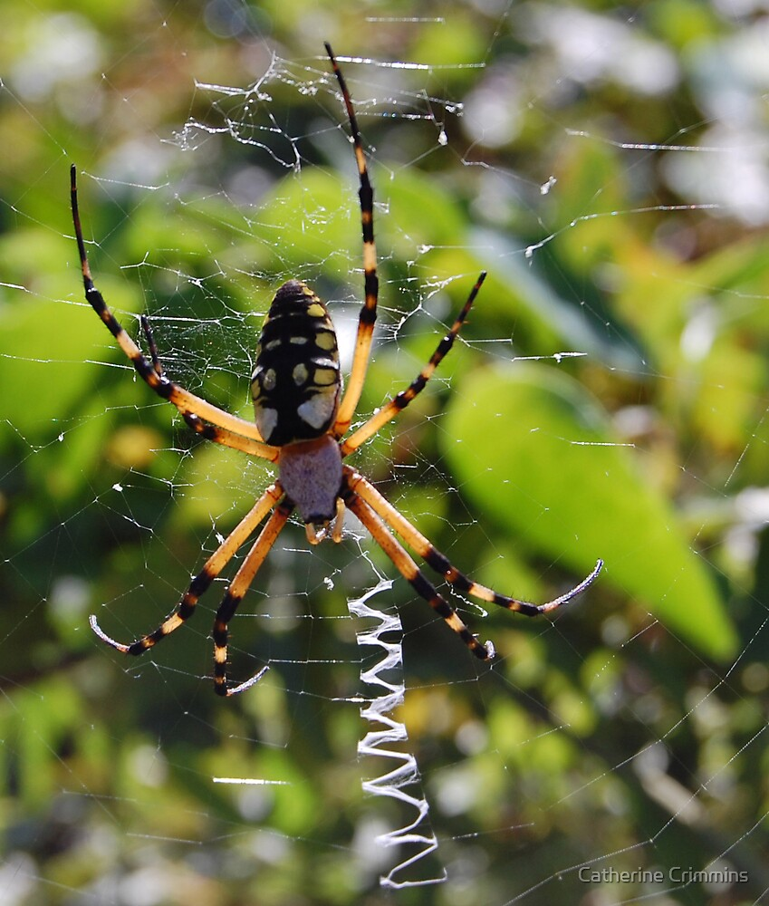 spider by Catherine Crimmins