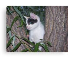 Kitty Outdoors Canvas Print