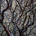 Manzanita by Chris Gudger