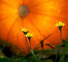 Pumpkin time by Deri Dority