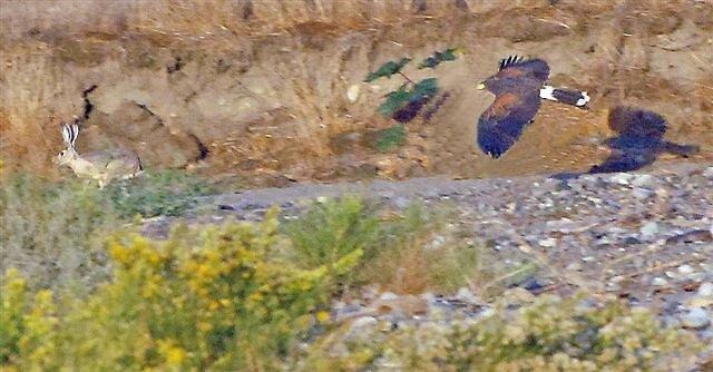 Predator by raptrlvr