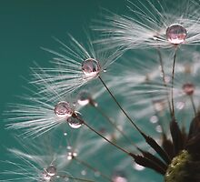 Dandelion Umbrellas by Kathy Reid