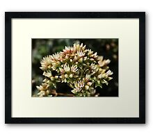 Stages OF Nature Framed Print