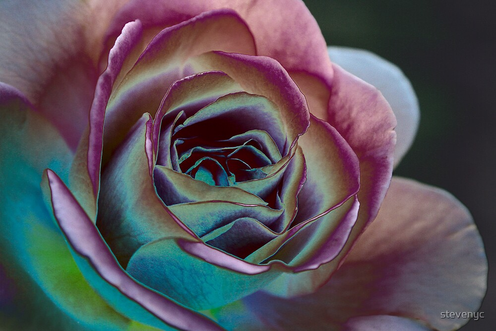 Midnight Flora by stevenyc