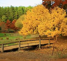 Golden Valley Tree Park, Balingup, WA by Elaine Teague