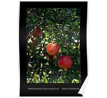 Pomegranates - Cool Stuff Poster