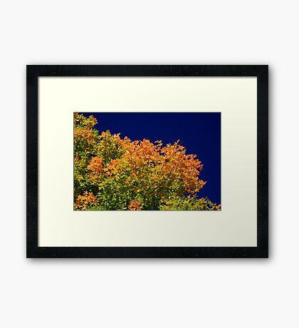 Splendor Of Fall  Framed Print