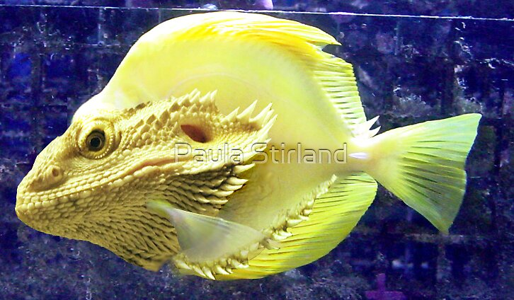 Yellow bearded tropical fish by Paula Stirland