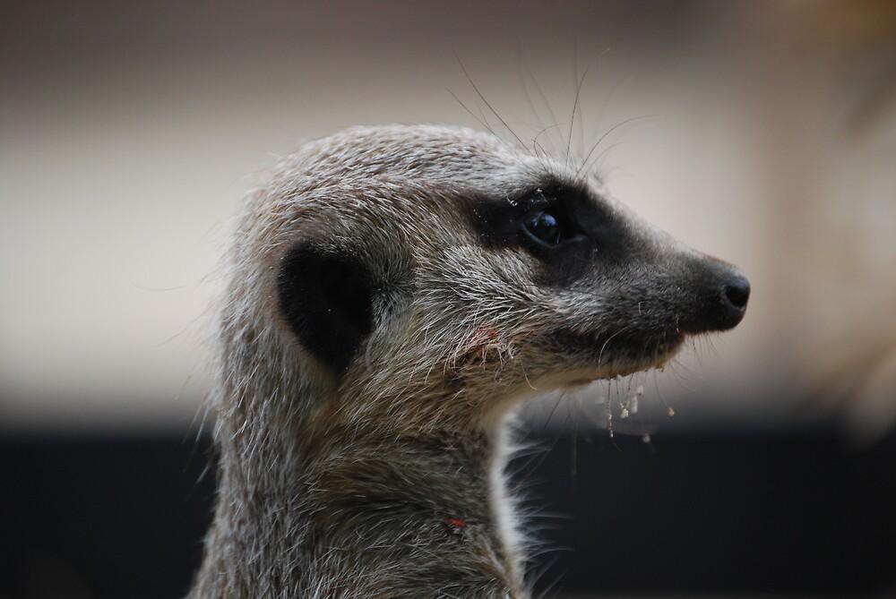Meerkat by Princessbren2006