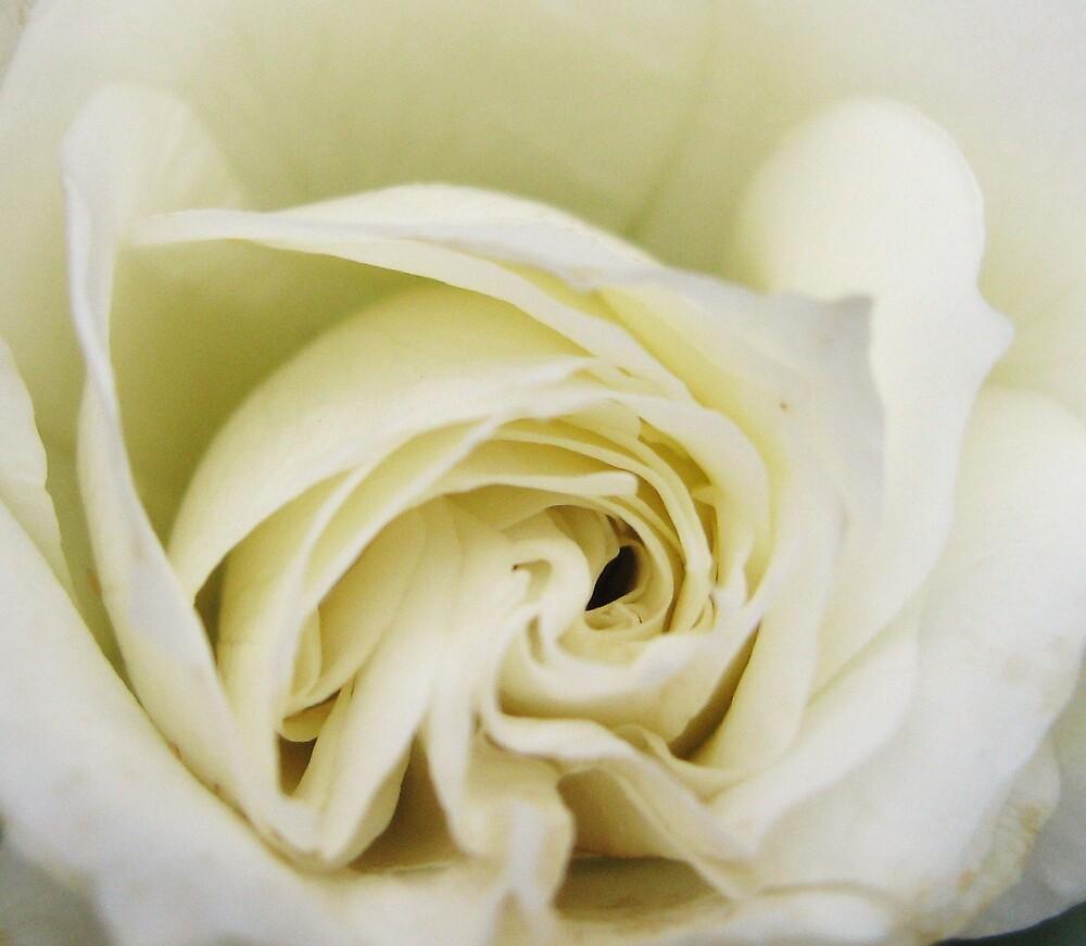 Rose3 by Sara Wiggins