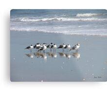 The Gull Gang Metal Print