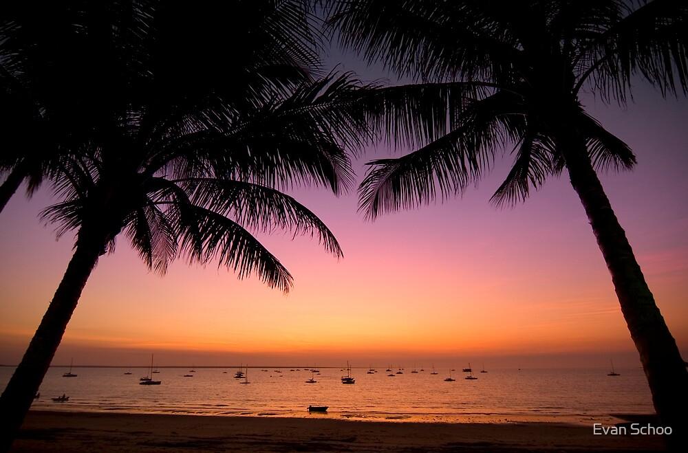 Amongst the Palms by Evan Schoo
