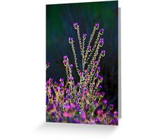 Pattersons Purple Weed  Greeting Card