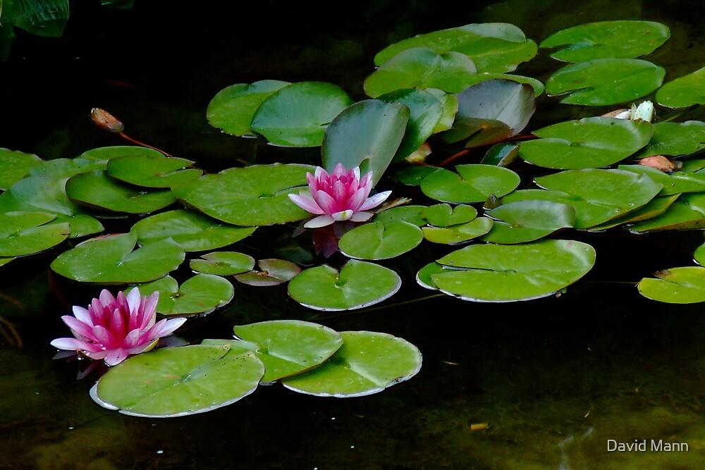 Two Lilies by David Mann