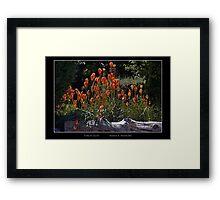Torch Lilies - Cool Stuff Framed Print