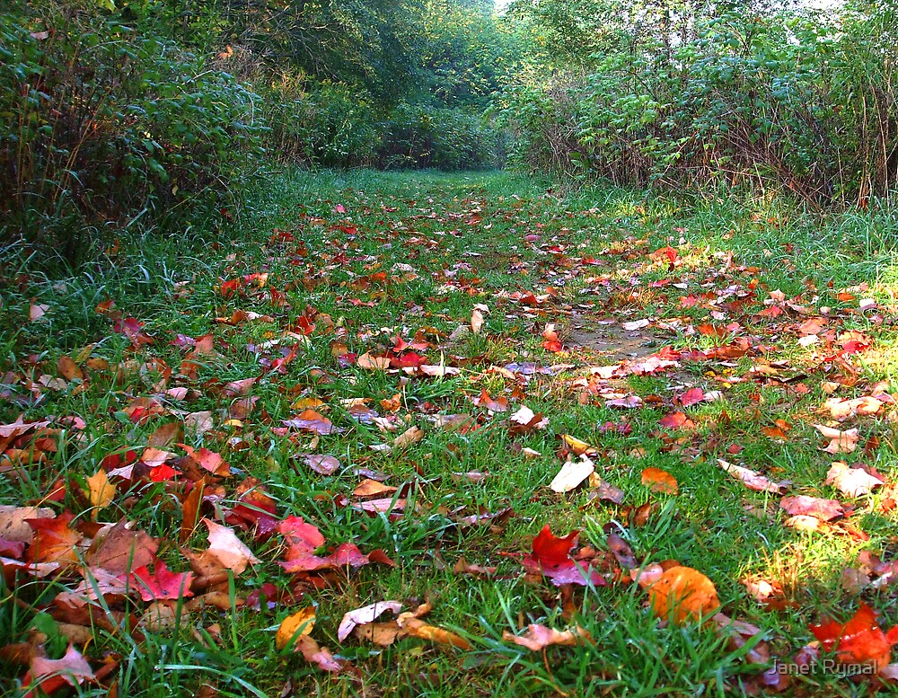 Autumn Path by Janet Rymal