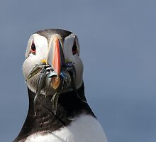 Puffin by Kate MacRae