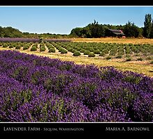 Lavender Farm - Cool Stuff by Maria A. Barnowl