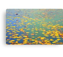 The Golden Lilly Pond Canvas Print