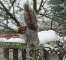 Squirrel in the Snow by AnnDixon