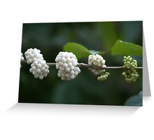 Berries Ripening from Green to White Greeting Card