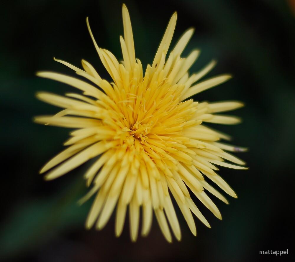 Flower by mattappel