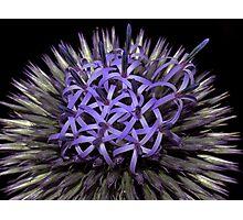 Flower Power ! Photographic Print