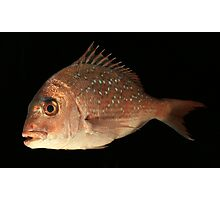 The Unhappy Snapper Photographic Print