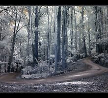 Infra Red Mountain Road by Louise Wolfers